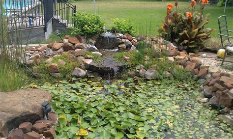 backyard aquaponics forum converting a backyard pond for aquaponics in central texas