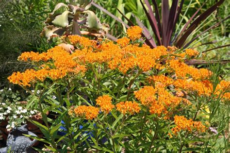 wildflowers that bloom in the fall black gold fall wildflowers for pollinators black gold
