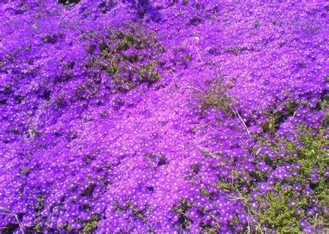 Bed Of Flowers by Purple Bed Of Flowers By Soulloss On Deviantart
