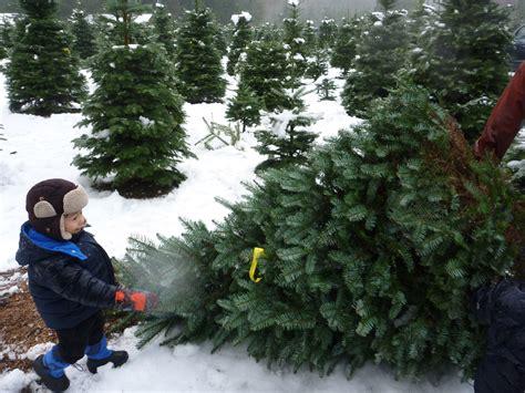 best 28 u cut christmas trees seattle 100 u cut
