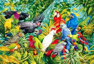 colorful parrot crossword the world of parrots pet attack