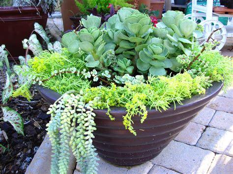 sedum container gardens container gardening with katg cubit s container