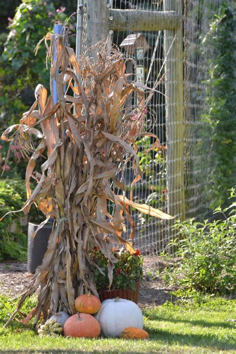 fall decorations with corn stalks beautiful fall decorations made with dried corn and corn