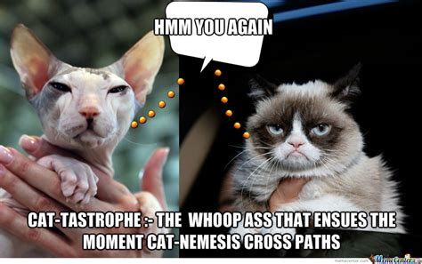 Hairless Cat Meme - catastrophe sphynx versus grumpy cat by wumc meme center