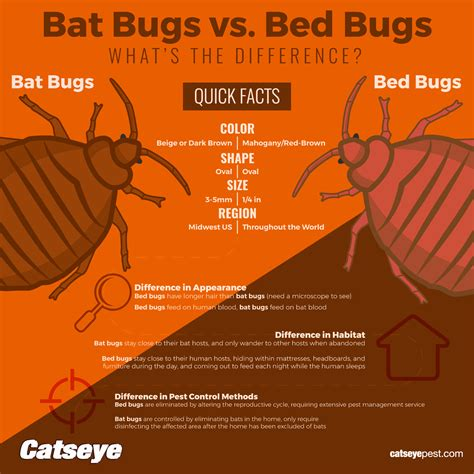 bat bug vs bed bug what s the difference between a bat bug bed bug