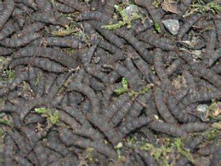 larven im garten larven anderer insekten
