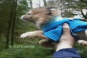 imagenes graciosas animales movimiento gifs e im 225 genes de perros graciosos y chistosos con movimiento