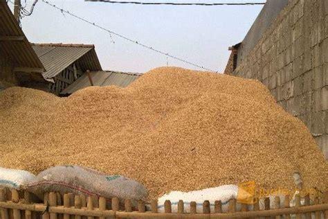 Sekam Padi Bakar sekam padi murah kab bekasi jualo