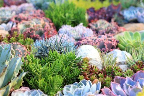 flower garden reef how to plant yourself a coral reef garden gardendrum