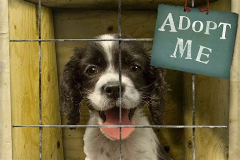 animal shelter dogs for adoption 10 reasons to adopt a shelter pet