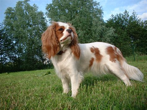 types of breeds different types of breeds hd breeds small pets for upets for u image animal