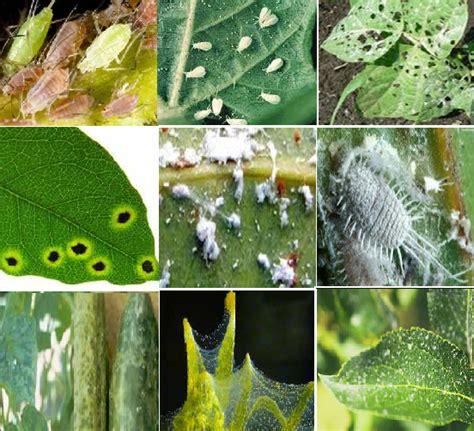 pest in garden plant pests aquaponics philippines
