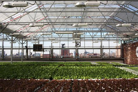 urban green house spotlight gotham greens talks rooftop farming against the