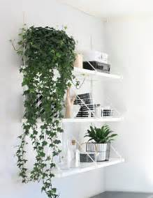 Indoor Plants For Home by Green Thumb Our Favorite Indoor Plants To Grow In Your