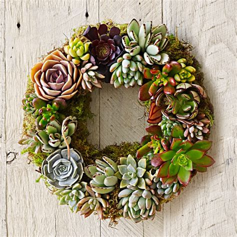 How To Propagate A Succulent Cookie And Kate - mixed succulent wreath williams sonoma