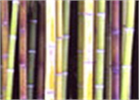 bambus im garten pflanzen 2002 garten gartenanlage pflanzen bl 252 ten duftpflanzen