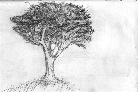 drawings of tree the b roll 187 archives 187 drawing 021 a tree