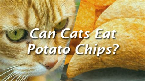 can dogs eat potato chips can cats eat potato chips pet consider