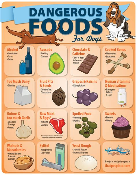 food for puppies dangerous foods for dogs infographic thatpetplace