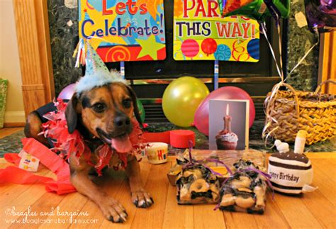3 dogs bakery turns 3 with three bakery beagles and bargains