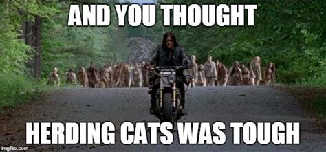 Herding Cats Meme - herding cars imgflip