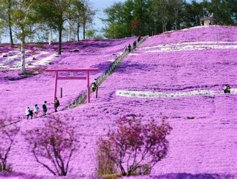 imagenes impresionantes de japon fotos de la primavera en jap 243 n