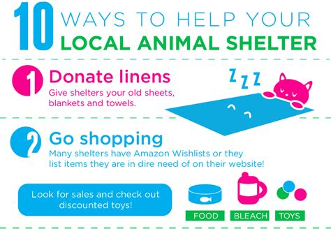 8 Ways To Help Out Your Local Animal Shelter by The Tiny Tabby There Are Tons Of Ways To Help Your Local
