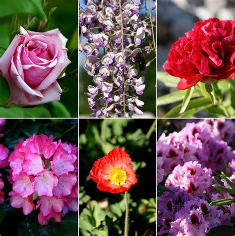 fiori di tutti i tipi cuoche dell altro mondo 3 giorni di mostra mercato
