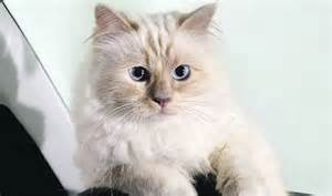Jobs By Salary by Watch Out Cara How Did Karl Largerfeld S Cat Make Just