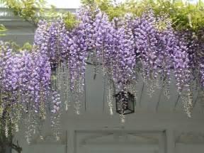 dream home with patios how climbing vines enhances the