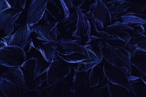 blue wallpaper hd tumblr dark blue flowers tumblr wallpaper high quality wallpaper