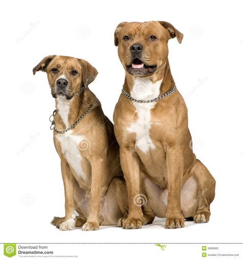 crossbreed dogs two crossbreed dogs stock photo image 4990660