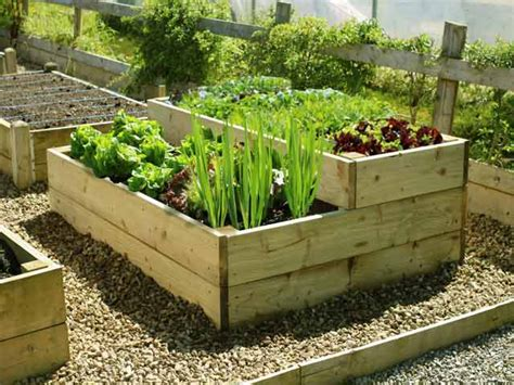 Raised Vegetable Planter by Raised Vegetable Beds Stepped Level Timber Planter