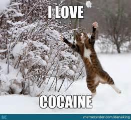 Cocaine Cat Meme - catch that ball of cocaine by danaking meme center