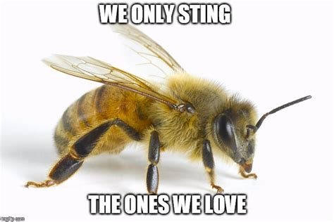 Bee Meme - image tagged in love bees imgflip