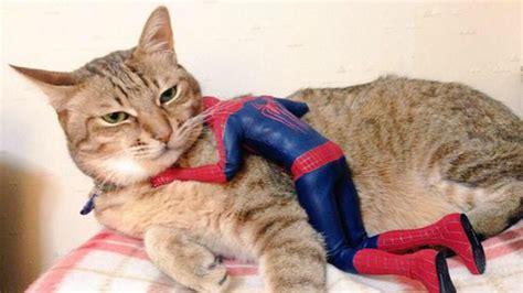 cat hugs it s national hug your cat day nerdist
