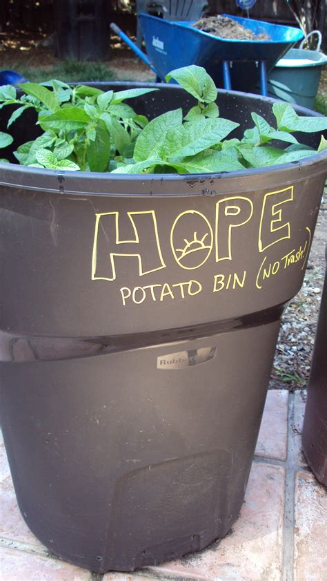 how to grow potatoes in a trash can hope gardens