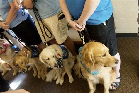 comfort dog laws dogs who comforted sandy hook families injured in shooting