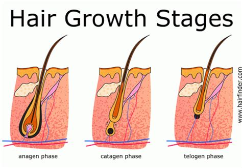 Home Remedies For Faster Hair Growth Hair Growth Cycle