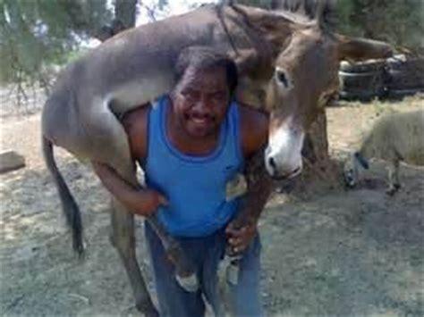 mujer es cogida por un burro frases sobre burros