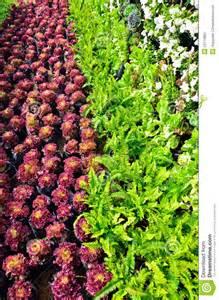 beautiful vegetable garden stock photography image 23114852