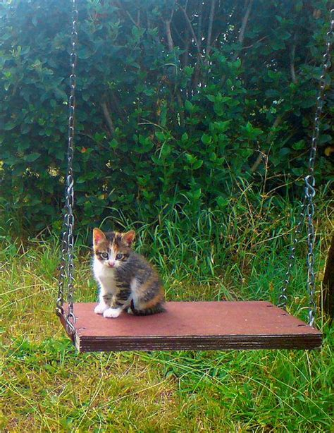 swing cats sitting on the swing cats pinterest