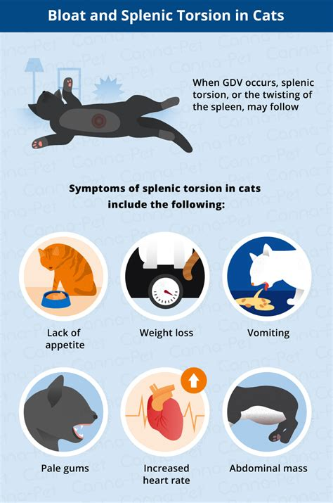 signs of bloat in dogs bloat in cats symptoms cats