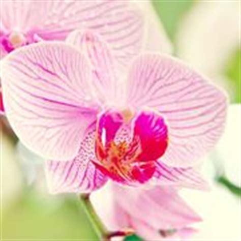 disegnare fiori significato significato fiori tulipano linguaggio dei fiori