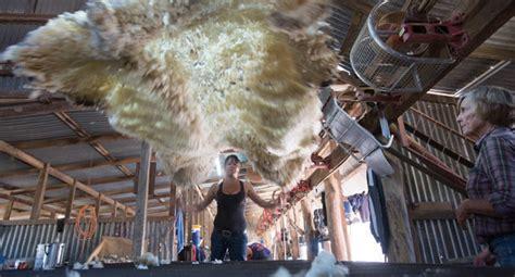 shearing sheds australian geographic