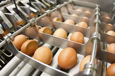 the egg factory order eggs new era of criminal prosecution for those in the food