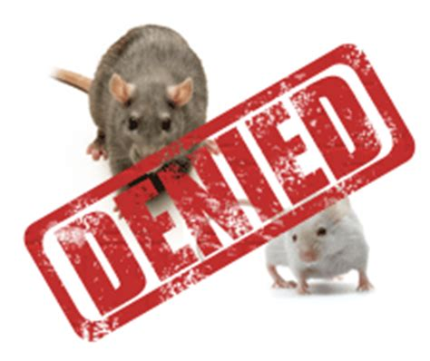 never have rodents in your home again rodent proofing