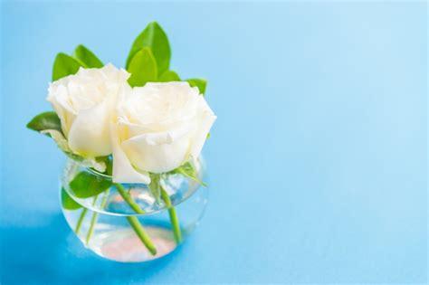 imagenes de rosas blancas gratis rosas blancas bonitas descargar fotos gratis