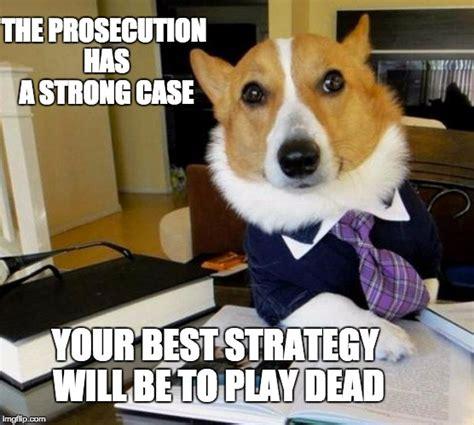 Lawyer Dog Memes - lawyer dog imgflip