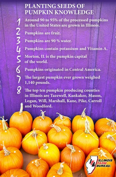 pumpkin facts discover and save creative ideas